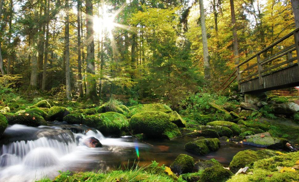 Flußlauf im Bayerischen Wald mit einer Holzbrücke.