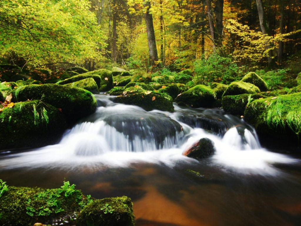 Die Saußbachklamm im Bayerischen Wald zeigt sich mit fließendem Wasser, tollen Steinsformationen und einem satten Grün im Wald.