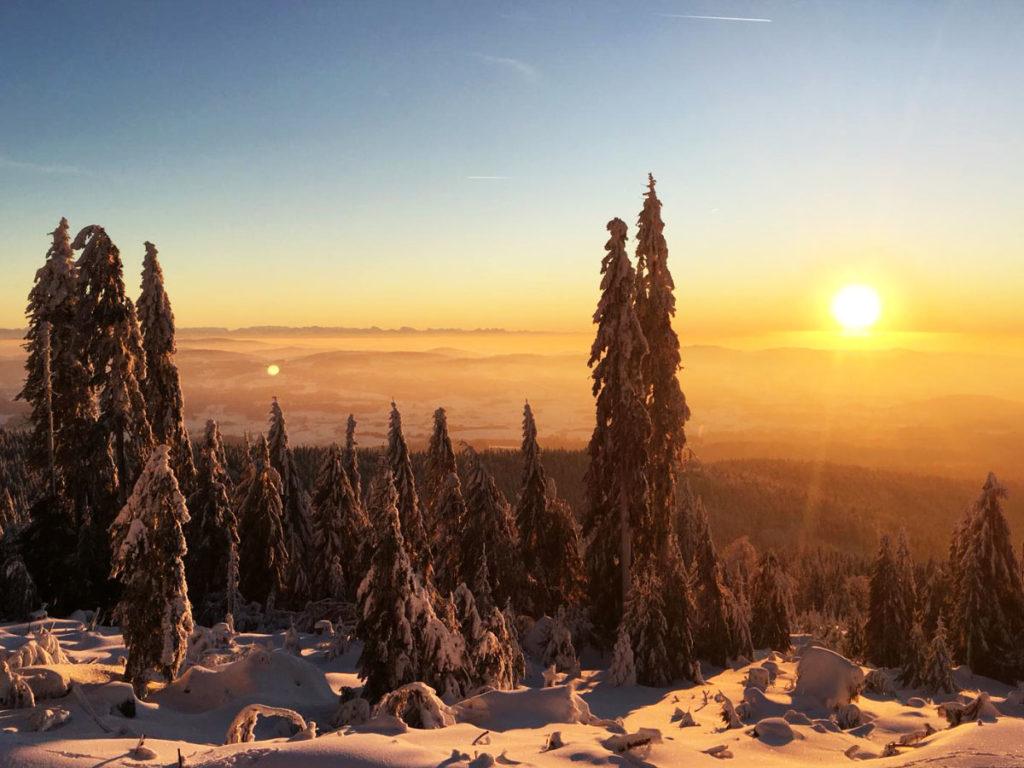 Ein winterlicher Sonnenuntergang im Bayerischen Wald mit schneebedeckten Tannen und Weitblick.
